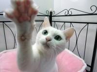 アナゴ(17歳/女の子) 代表作:CM「アフラック」、ドラマ「猫侍」など