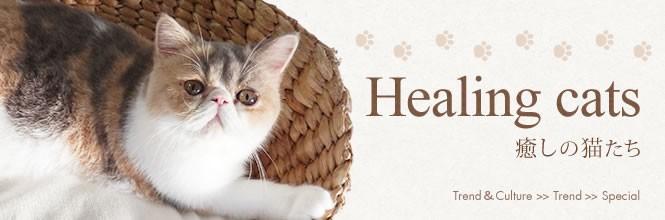 人気猫大集合! 猫に癒されるひととき