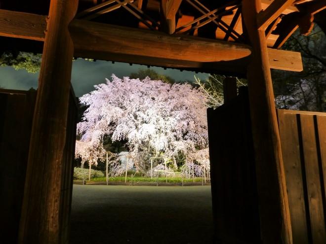 六義園の内定大門としだれ桜のライトアップ