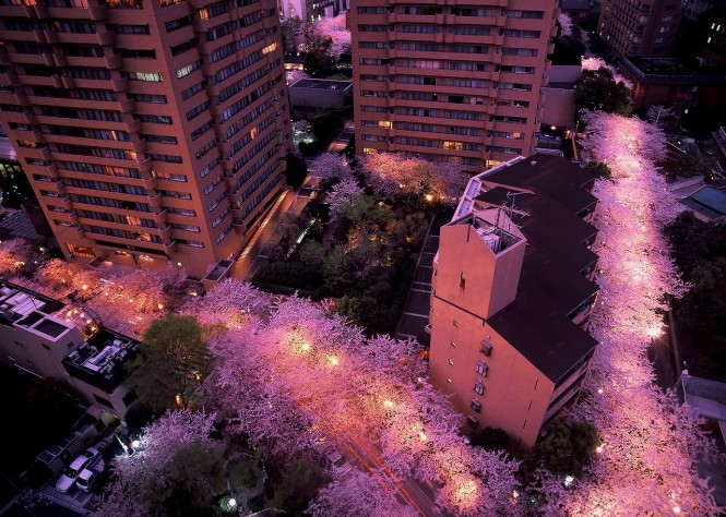 アークヒルズの桜並木ライトアップ
