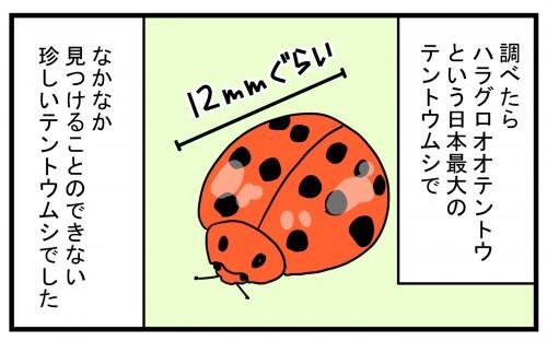 珍しい種類のテントウムシを見つけたものの…!?