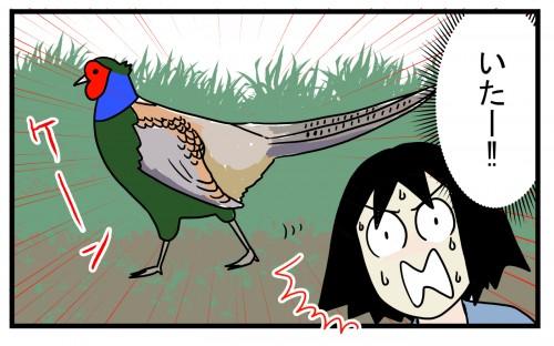 そこにいたのは確かにキジらしき鳥!