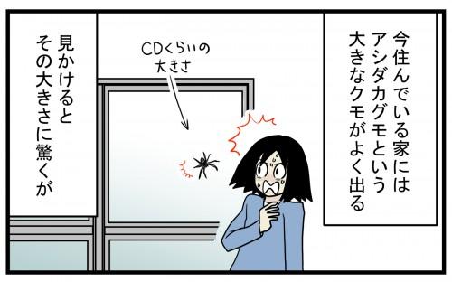まさかの事実が発覚! 家の中でクモが運んでいた「小さなタブレット」の正体【こどもと見つけた小さな発見日誌 Vol.40】