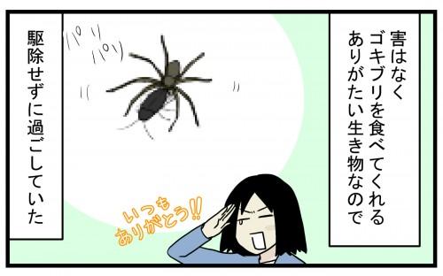 わが家に大きなクモが住み着いて、その種類は…!?