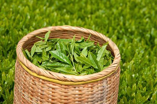 新茶ならではの繊細な香りを楽しむには、なるべく早めに飲みきろう