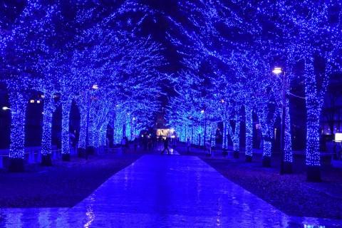 サムネイル イルミネーション&クリスマスツリー 都内厳選スポットをご紹介