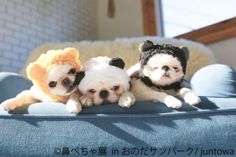 サムネイル 【画像】かわいい犬に胸キュン♪ 人気のわんこ写真まとめ