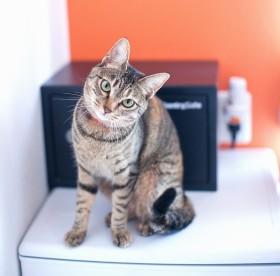 猫付きシェアハウス「562(ごろにゃ)荻窪」/写真提供:NPO法人「東京キャットガーディアン」
