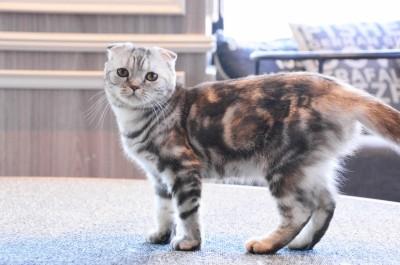 「猫カフェMoCHA渋谷店」