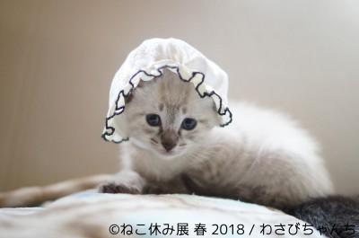写真展『ねこ休み展 春 2018』