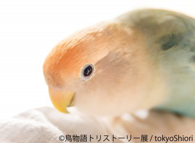 写真展『鳥物語トリストーリー展』