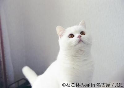 ねこの合同写真展&物販展『ねこ休み展 in 名古屋』『ねこ休み展 in 静岡』『ねこ休み展 in 広島』
