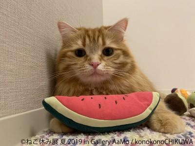 猫の合同写真展&物販展『ねこ休み展 夏 2019 in Gallery AaMo』