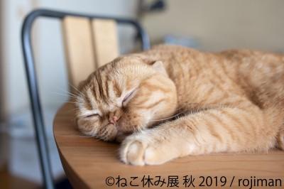 猫の合同写真展&物販展『ねこ休み展 秋 2019』
