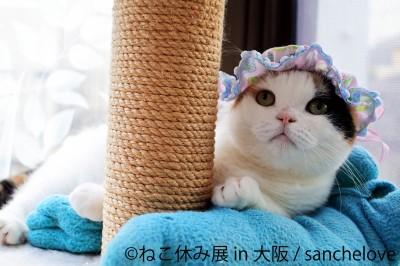 猫の合同写真展&物販展『ねこ休み展 in 大阪』
