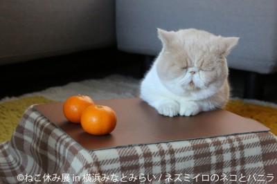 猫の合同写真展&物販展『ねこ休み展 in 横浜みなとみらい』