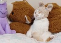 まるごとホイちゃん展で見られるホイちゃんの写真