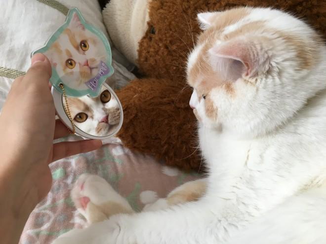 鏡の中のプリティーキャットはどこの娘かしら? の文言が添えられている