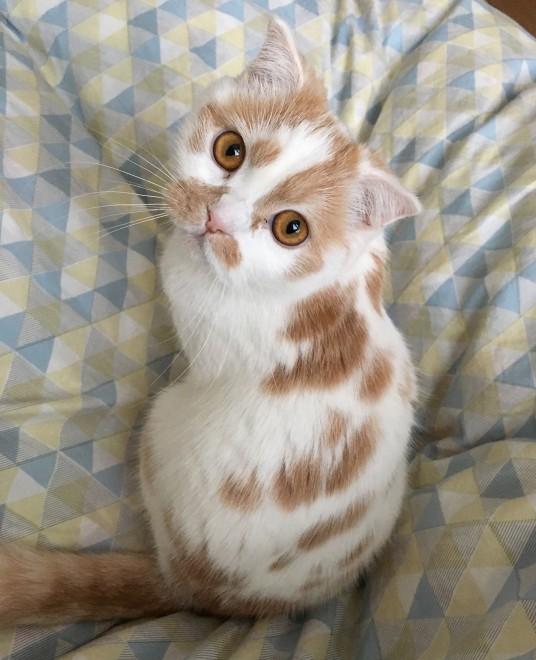ちくわ柄の甘え猫