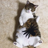 インスタで人気のスター猫・すずめ(@suzume0513)