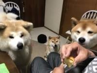 飼い主さんの食べ物をガン見する3匹
