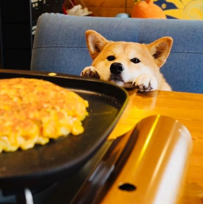 飼い主さんが料理する姿をお利口に待つぷんちゃん