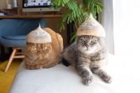中川翔子が番組で作ったというスライムの抜け毛帽子 #ヌケゲスライムベス
