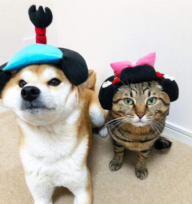(写真左より)柴犬のゆうとMIX猫のとろ