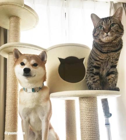 サムネイル 【猫】仲良し「ゆうとろ三男坊」フォトギャラリー