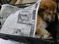 眠ってしまい、新聞紙をかけられる