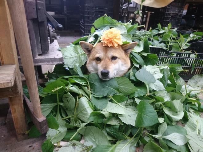 何もしないという激務をこなすぺこちゃん。葉っぱをかけてあげると、喜ぶという (C)高瀬花園
