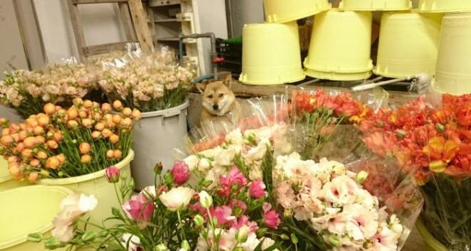 お花にまぎれ、職場に佇むぺこちゃん