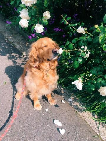 サムネイル 【犬】鼻のニオイをかぐ犬、むくくんフォトギャラリー