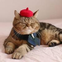 赤いベレー帽がお似合いの寅ちゃん
