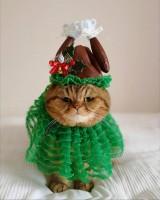クリスマスの七面鳥コス、ご予約はお早めに