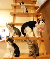 猫家族がいっぱい