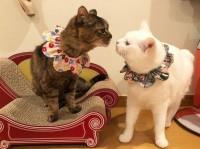 仲良しモコとコト