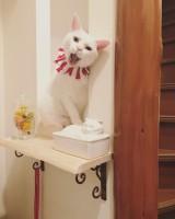 玄関にお出迎えに来てくれるコトちゃん