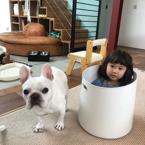 サムネイル 【犬】ブルドック犬、べんじーくんの日常