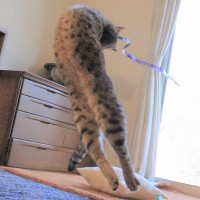 (写真提供:無重力猫 ミルコのお家@mirko__chisa)