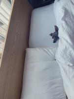 ベッドからひょっこり、てんてんちゃん