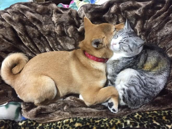 仲良しなはるおくんと猫ちゃん
