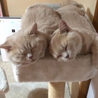 癒しの寝顔ツーショット(画像提供:みかんとじろうさんち @jirosan77)