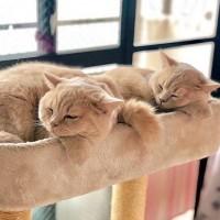 なかよくお昼寝(画像提供:みかんとじろうさんち @jirosan77)