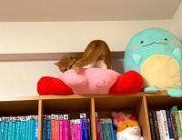本棚の上のカービィを潰す方法