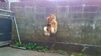 壁にいるカマキリをとろうと、ジャンプする子犬たち