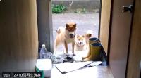 ご飯ではなかった様子。落ち込む柴犬ちゃん