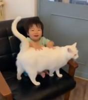 1才の男の子に毎日寄り添うブランくんと、黒猫ノワールちゃん、ハチワレ猫グリちゃんの日常