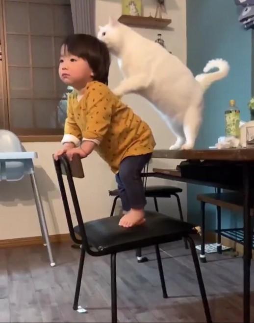 """椅子の上に立つ男の子を座るように促す""""プロシッター猫""""ブランさん"""