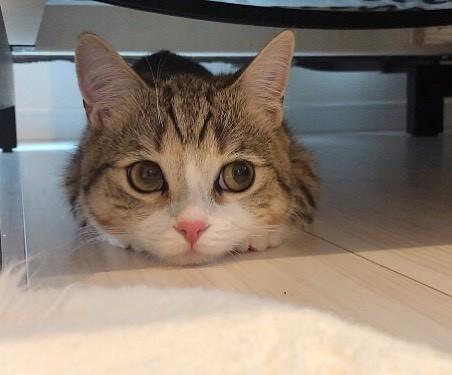 サムネイル 【猫】そんなところにいたの!?  うちの猫が落ち着く意外な場所まとめ